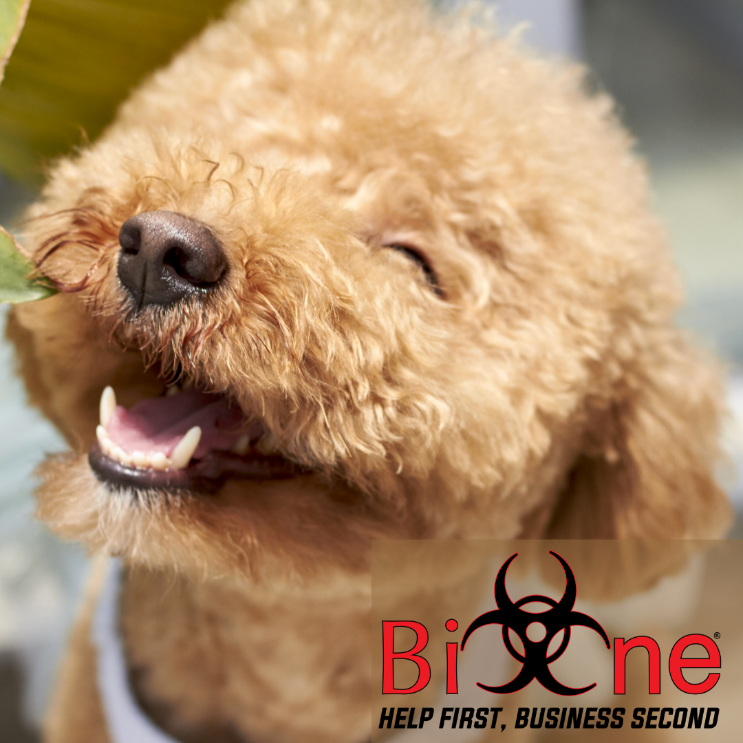 Protect your fur family from canine parvovirus